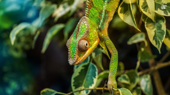 How Web-to-Print Positions In-plant as a Chameleon